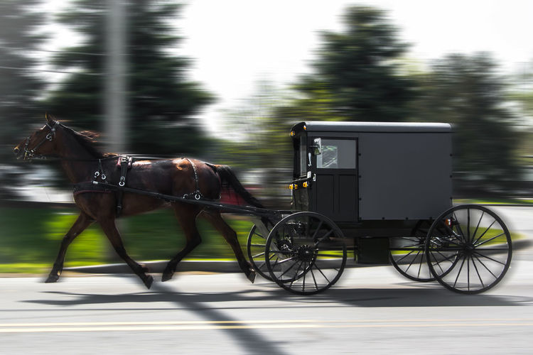 Amish late for church Amish Amishcountry Amish Country Amish Buggy Amish Town Amish Know How To Roll Amish Life Amishmafia Pensylvania Pensylvania
