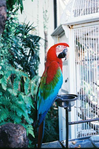 Close-up of macaw perching bird feeder