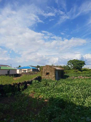 A barn in the yard. Green Blue Sky Clouds And Sky Summertime EyeEm Gallery Agriculture Sky Cloud - Sky Farmland Cultivated Land Agricultural Field Farm