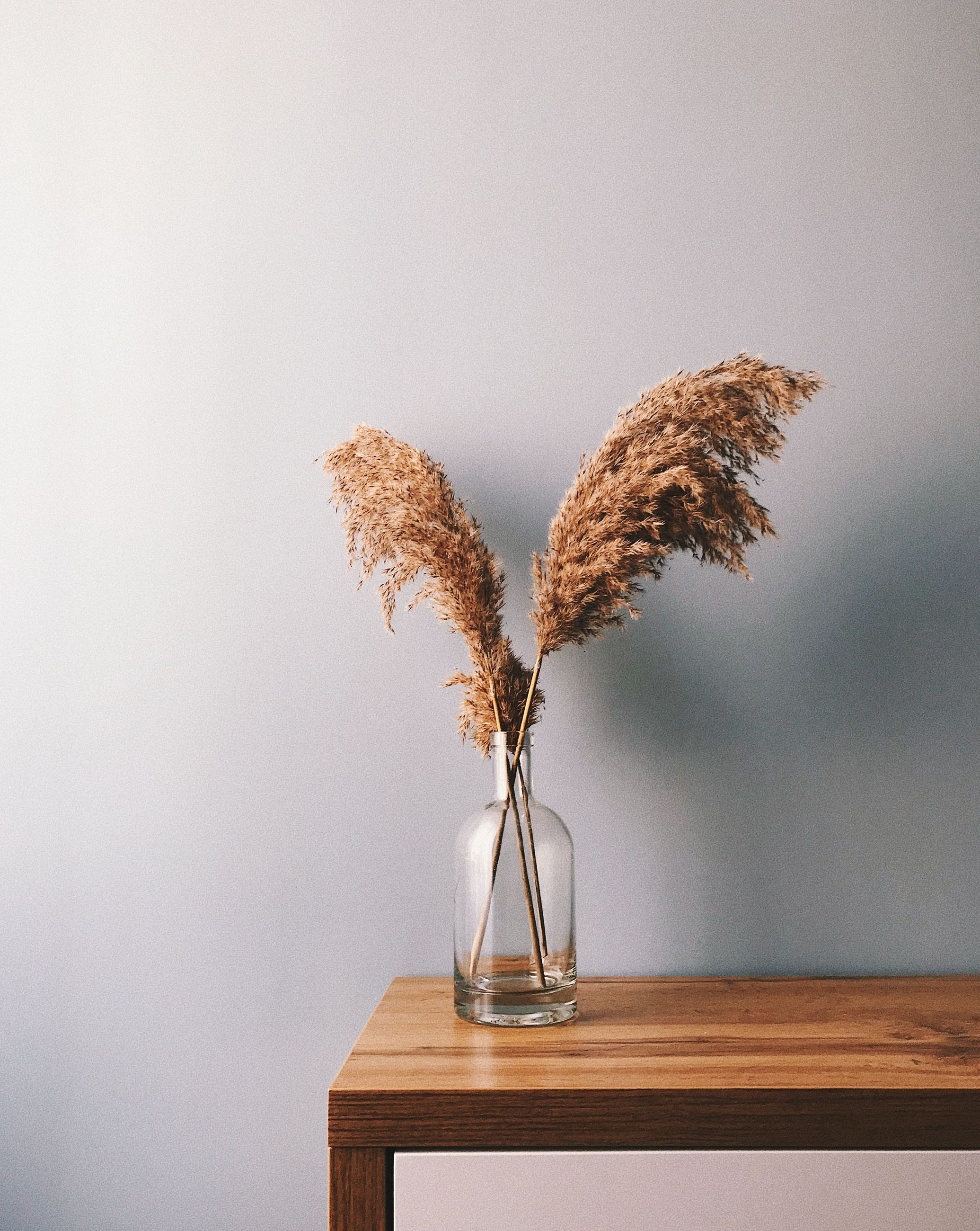 table, vase, plant, indoors, no people, still life, nature, glass - material, wood - material, copy space, wall - building feature, close-up, flowering plant, flower, decoration, vulnerability, fragility, softness