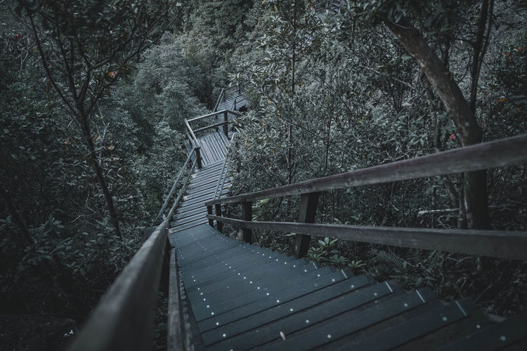 Tree Plant Connection The Way Forward Forest Direction Bridge Land Railing Nature Bridge - Man Made Structure No People Footbridge Architecture Built Structure Day Transportation Outdoors Tranquility Staircase Diminishing Perspective