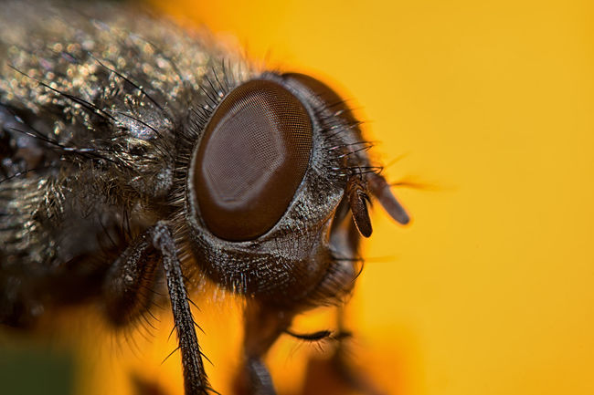 Animal Eye Animal Themes Animal Wildlife Animals In The Wild Beauty In Nature Close-up Day Extreme Close-up Focus On Foreground Housefly Insect Macro Nature No People One Animal Outdoors Stereo