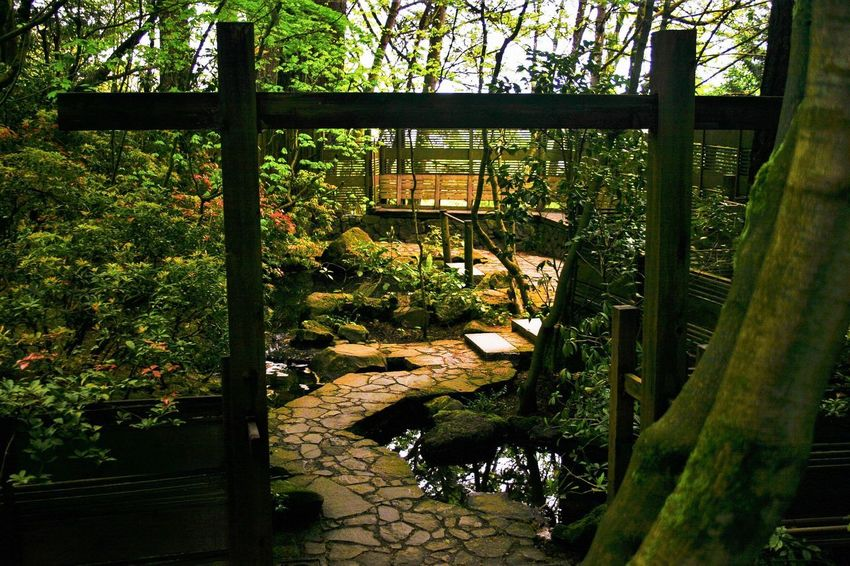 A secret walkway through Japanese Garden Japanese  Plant Nature Tranquility No People Day Tree Outdoors Growth