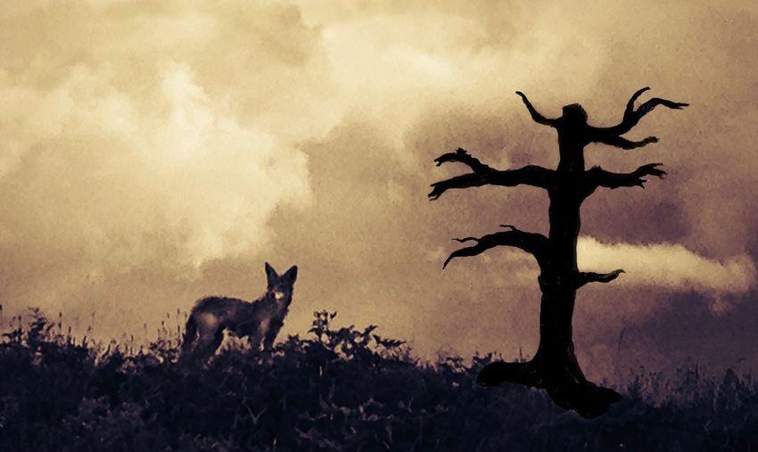 Cayote Animal Mammal Animal Themes Group Of Animals Sky Silhouette Vertebrate EyeEmNewHere
