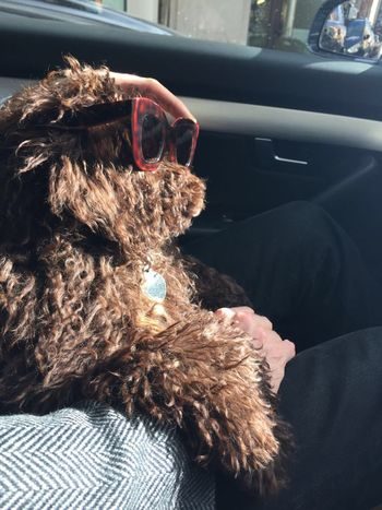 SWAG ♥ Taking Photos Enjoying Life Doggy Days  Hanging Out Sukie Sunglasses Check This Out Hanging Out Hello World Swag Style