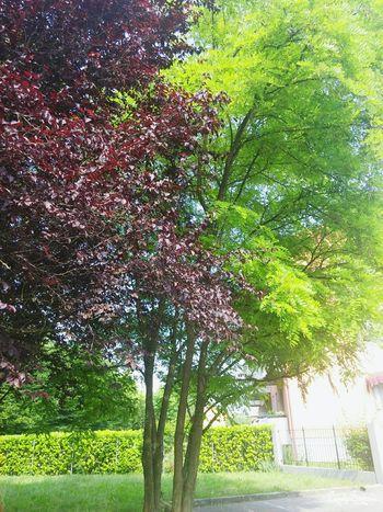 Nature Piante Alberi 😚