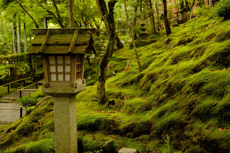 Stone lantern by moss covered rocks at japanese garden