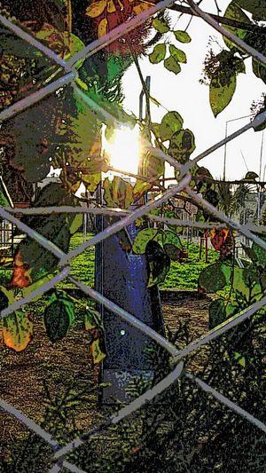 Sunshine Thepark Beautiful EyeEm Nature Lover Urban Landscape Urban Nature Childhood LittlePlanet Past Time Cartoon miss my childhood ?