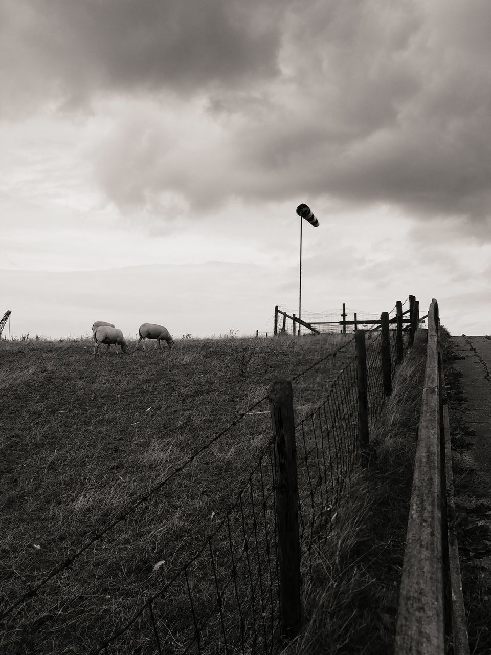 cloud - sky, sky, field, grass, outdoors, landscape, nature, day, animal themes, mammal, rural scene, no people, sheep, domestic animals, beauty in nature