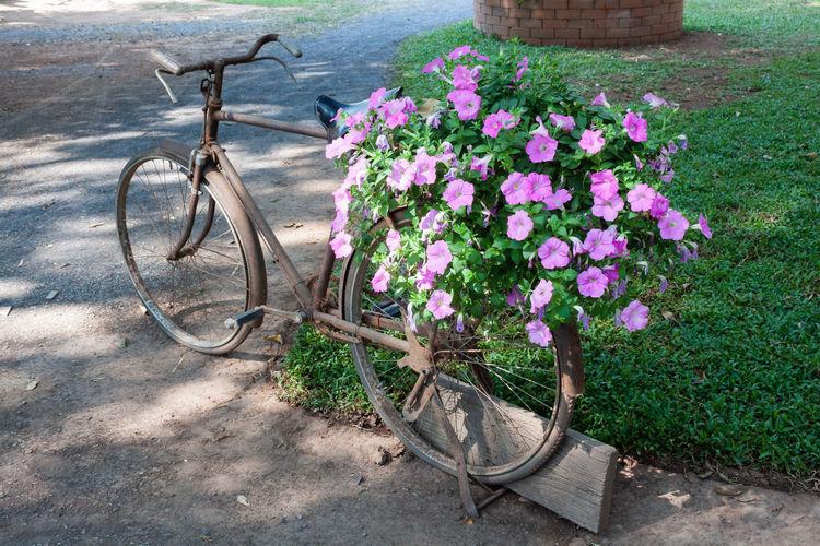 Pink flowering plants in basket