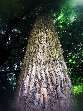 The giant.. Arbre Tree First Eyeem Photo Popular Photos Riviere Arbre