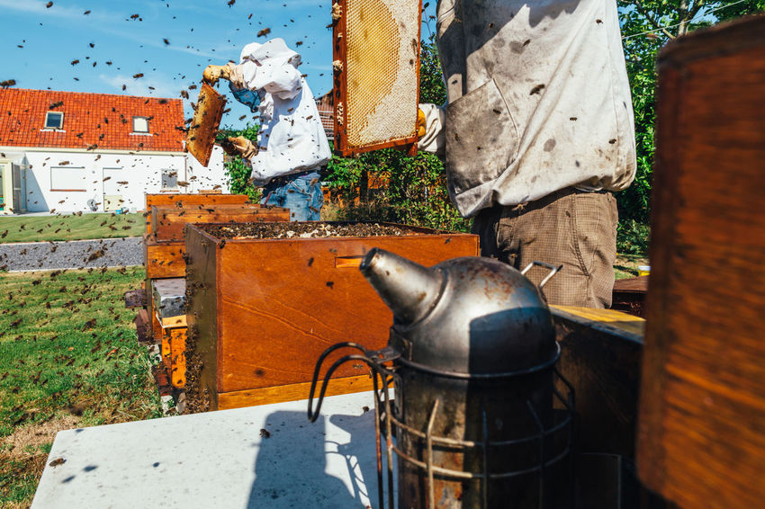 Apiary Occupation Beekeeper Smoker Healthy Bee Colony Hive Pollen Beehive Honey Bee Beekeeping Agriculture Extraction Production Bees Keeping Honey Honey Production Honeycomb Food Bees Insect Organic Beeswax Real People
