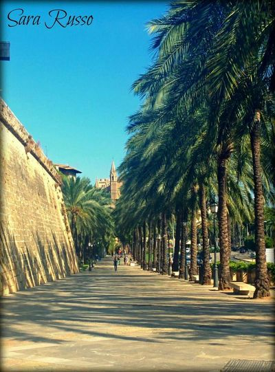 Palma De Mallorca Spain♥ Cruise Trip Keep Calm And Snap On Seaside Trees