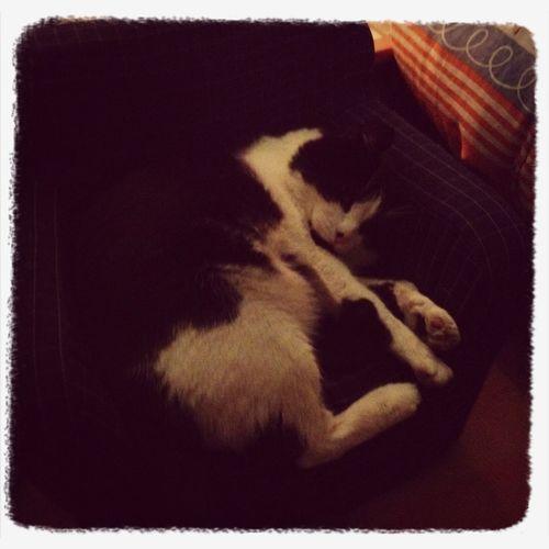 Le Chat Qui Dort