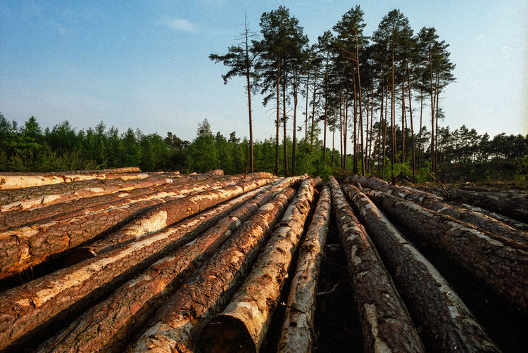 Block Clogs Cutting Cutting Trees Deforestation Deforestation Effect Deforestration Environment Environmental Damage Environmental Issues Forest Forest Industry Engineering Landscape Log Logs Lumber Industry Nature Nature No People No People, Outdoors Stack Timber Tree Tree