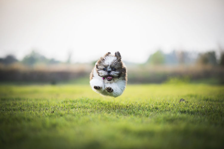 Dog Running Over Field Against Clear Sky