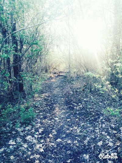 A walk in the woods...... First Eyeem Photo