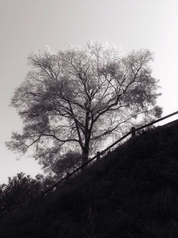 Blackandwhite Black And White Landscape Black And White Popular Photos Tree Beauty In Nature Nature Branch Low Angle View Tranquility No People Sky Day Outdoors Clear Sky Scenics Growth Lone Freshness Saikai City Japan