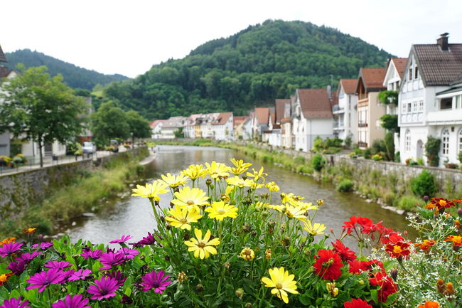 Black Forest Germany Colourful Flowers In Foreground Focus On Foreground Houses Along The River Mountain In The Distance Neat And Tidy No People Sony A6000 View From Bridge