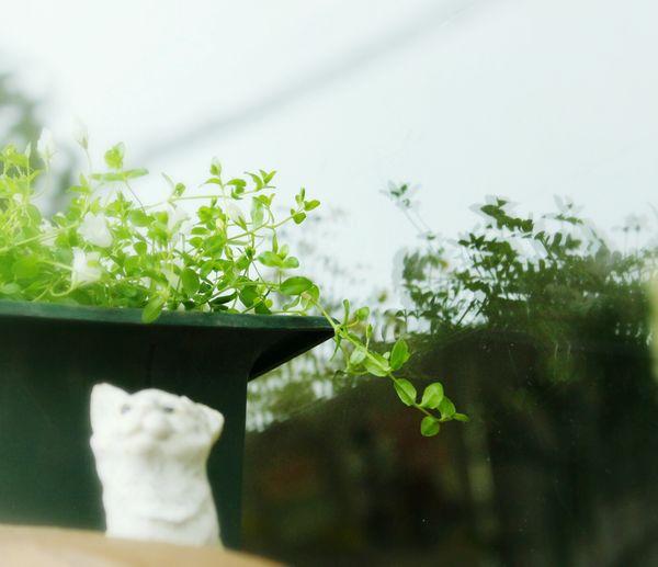 😺🎶 EyeEm Flower Flowers My Garden Flowers,Plants & Garden EyeEm Nature Lover Green Garden 花と庭 Sun Light 花