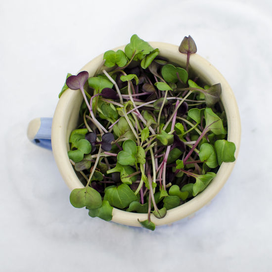 Close-up Day Food Food And Drink Freshness Green Color Growth Healthy Eating High Angle View Indoors  Leaf Microgreens Nature No People Still Life Studio Shot Vegan Vegan Food Vegetable White Background