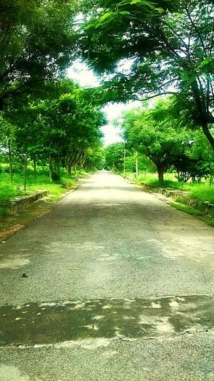 Love such greens. Tree Road The Way Forward Nature Outdoors Green Color Day Tranquility Growth No People Scenics Beauty In Nature Sky Awayfromconcretejungle First Eyeem Photo