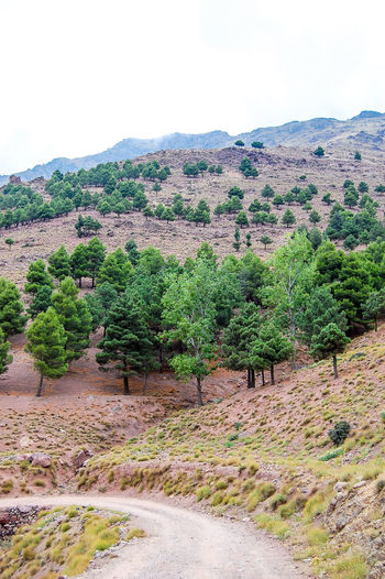 On the road to the unknown Day Green High Atlas Morocco Mountains Outdoors Remote Trees Trekking Path Curved Road