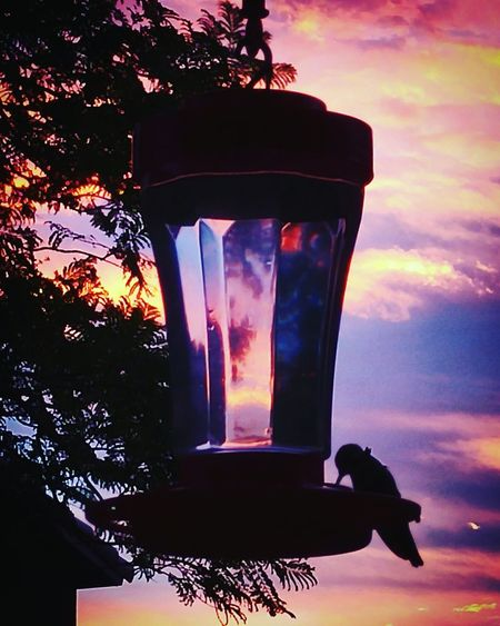 Need something to make background fade and make the feeder look more like a magical elixir :) Hummingbird Sunset Arizona Sunset