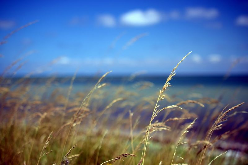 Nature Growth Tranquility Grass Tranquil Scene Field No People Beauty In Nature Scenics Outdoors Day Water Plant Landscape Sky Sea Close-up ByAZ3 Sommergefühle