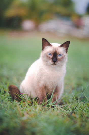 Unhappy cats Animal Themes Day Domestic Animals Domestic Cat Feline Grass Looking At Camera Mammal Nature No People One Animal Outdoors Pets Portrait Sitting