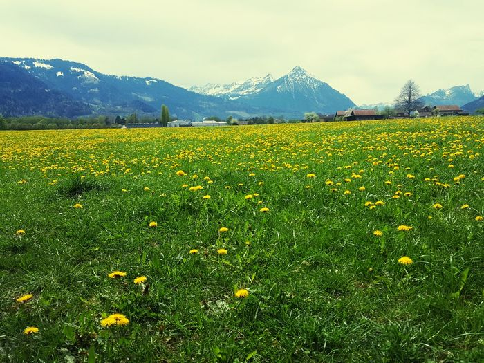 Berge Nature
