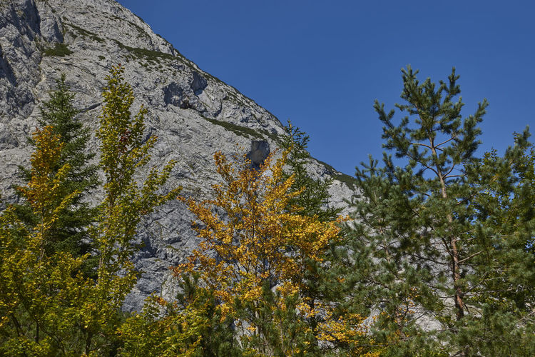 Low angle view of trees and rocks against sky