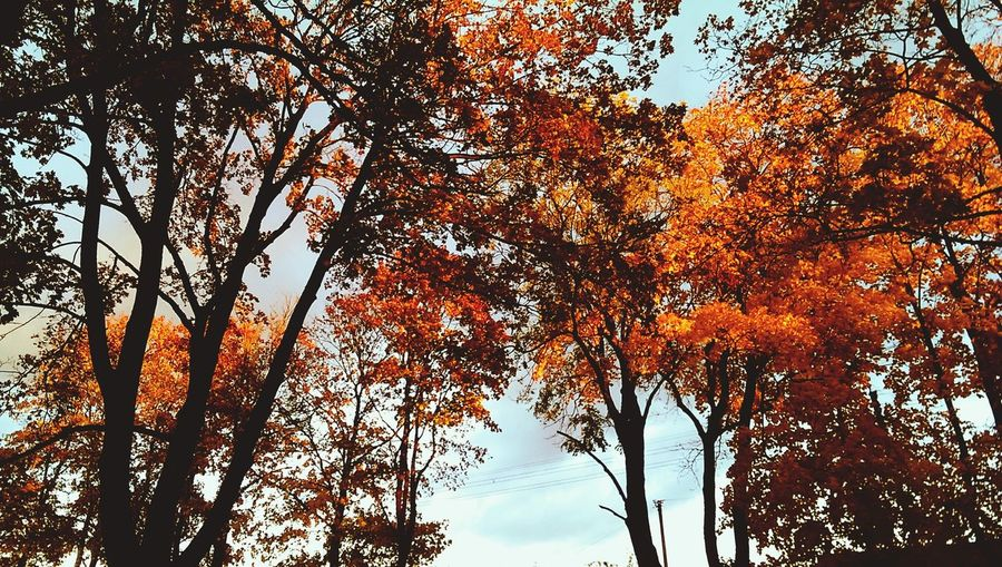 Just...Orange.Orange Color Tree Nature Beauty In Nature No People Sky Outdoors Leaf Autumn First Eyeem Photo