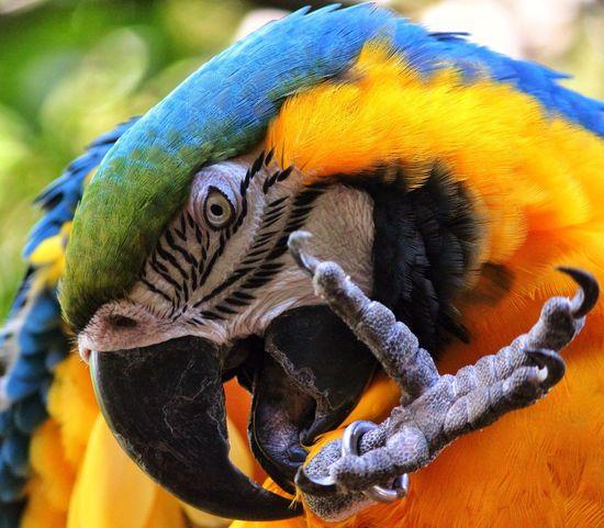 Birds Animals Photography Eye4photography