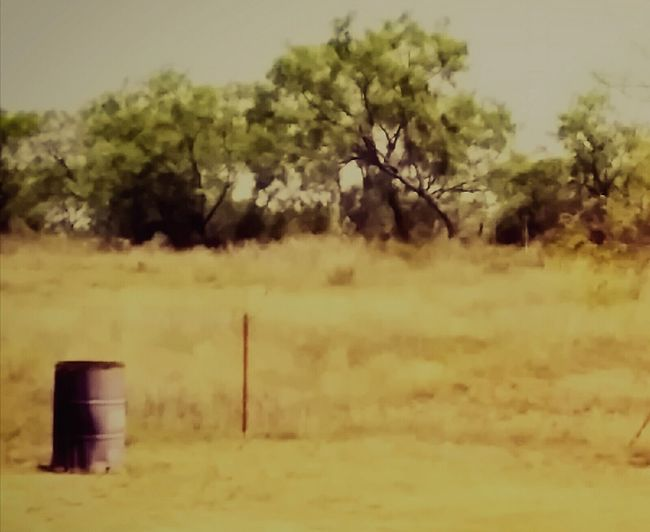The Burn Barrel Rural Scene Nature No People Outdoors Tree Day Mesquite West Texas Landscape Bronte Texas Remote Beauty In Nature Dirt Road Desert Arid Climate