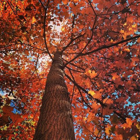 Fall Autumn Leaves Trees Nature Outdoors Newyork Bearmountain Upstateny Orange