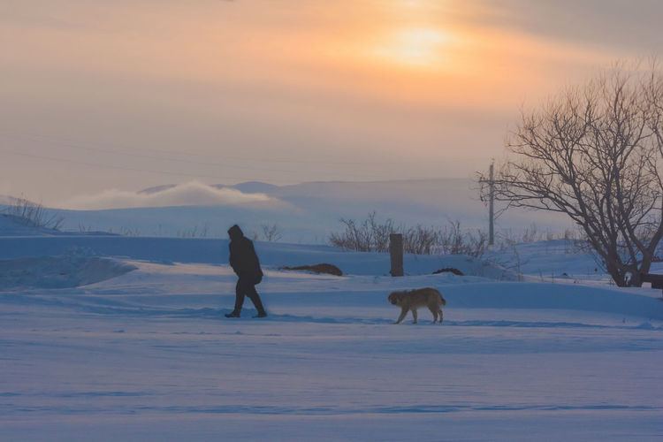 Horse standing on snow field against sky during sunset