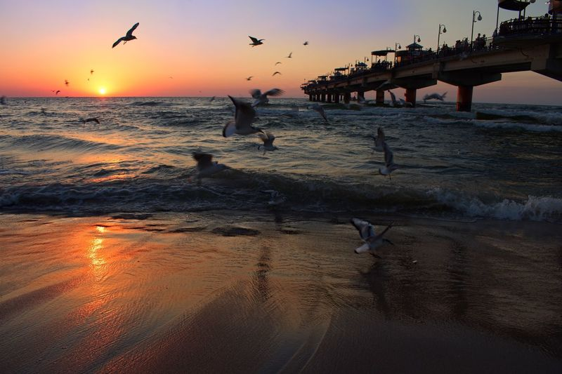 Miedzyzdroje, Poland Poland Baltic Sea Pier Seagulls Water Sky Sunset Beach Bird Sea Vertebrate Animals In The Wild Land Reflection Flying Beauty In Nature Outdoors Silhouette