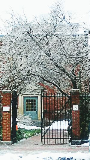 crystal trees~ My Point Of View Wintertime My City Brick Vintage Building Colors Of Life Loving The Landscape Winter Nature Lover Winter Beauty  Happy Moment Freezing Rain Enjoying Life Built Structure Architecture Day Building Exterior No People Outdoors Sky