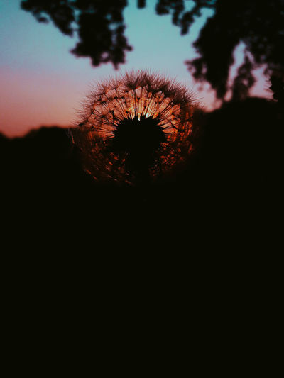 Silhouette Sunset Flower Nature Beauty In Nature Tranquility No People Beautiful Colors Nature Soffione Sunlight