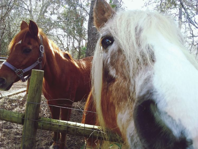 misty and Loretta trying to eat the camera 📷 No People Outdoors Portrait Tree Nature Close-up
