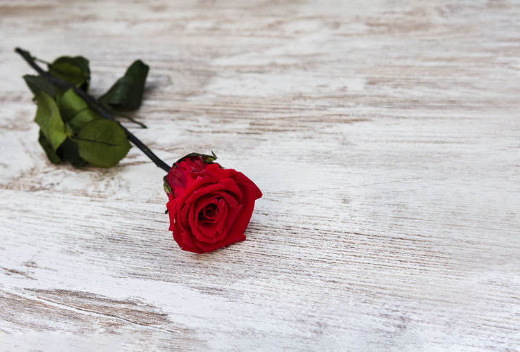 Beautiful red rose on rustic background with copy space. San Valentine's concept. Rosé Flower Plant Red Nature Table Petal Fragility Vulnerability  Freshness Close-up Wood - Material No People Flower Head Flower Arrangement Backgrounds Wallpaper Rustic Copy Space Blooming Blossom Valentine's Day  Romance Romantic Love