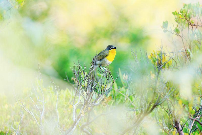 Bird perching plant