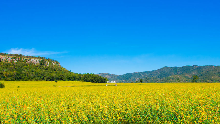 Landscape of golden flower with mountain and blue sky, beautiful summer nature, field, travel, with here...takfa district sign in thai language. Relaxing Agriculture Beauty In Nature Blue Crop  Day Field Flower Growth Landscape Mountain Mountain Range Mustard Plant Nature No People Oilseed Rape Outdoors Rural Scene Scenics Sky Spring Summer Tranquil Scene Tranquility Yellow
