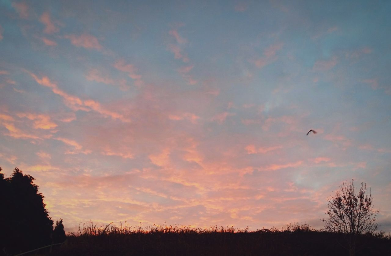 silhouette, sunset, sky, tree, flying, tranquil scene, nature, beauty in nature, scenics, bird, cloud - sky, outdoors, animal themes, tranquility, no people, animals in the wild, mid-air, landscape, one animal, day