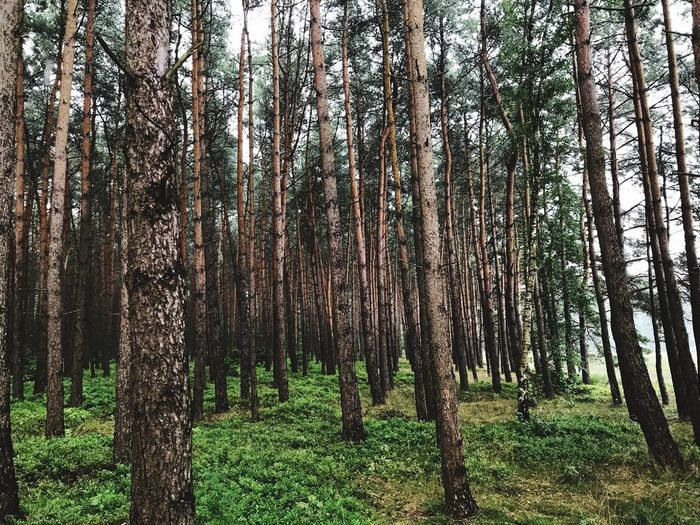 Tree Trunk Forest Growth Outdoors No People