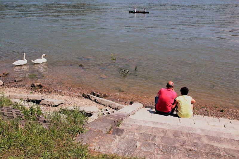 Danube Love Swans Animals In The Wild Beauty In Nature Bird Day Friendship Full Length High Angle View Lake Leisure Activity Lifestyles Mammal Men Nature Outdoors People Real People Sitting Togetherness Two People Water Women