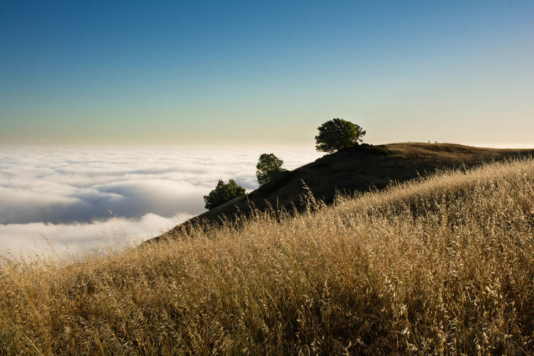Portrait of Three Trees Beauty In Nature Field Fog Grass Horizon Over Land Landscape Perspective Rural Scene Sky Tranquil Scene Tranquility