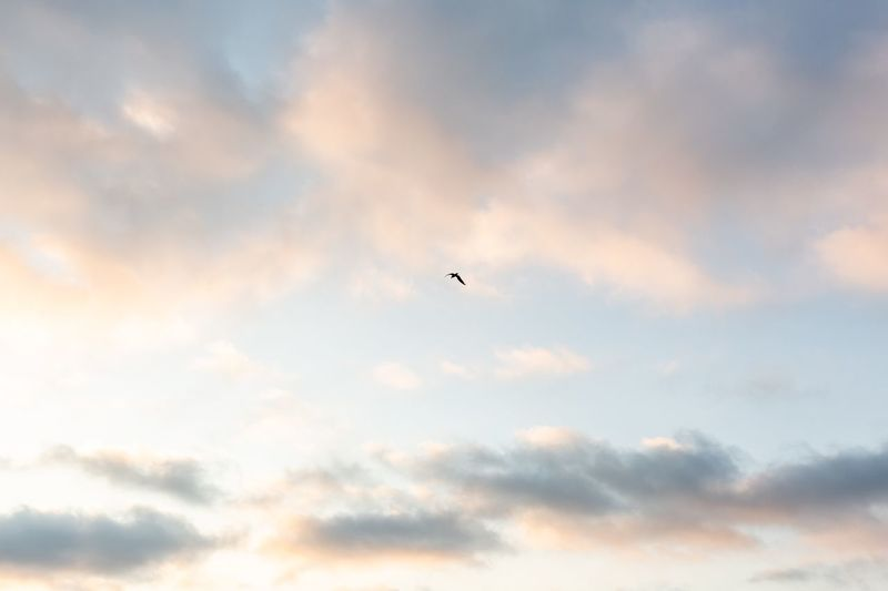 Cloud - Sky Sky Low Angle View Flying Bird Animal Animal Themes No People Animal Wildlife Beauty In Nature Nature Mid-air Airplane One Animal Scenics - Nature Tranquility Vertebrate Animals In The Wild Sunset Outdoors