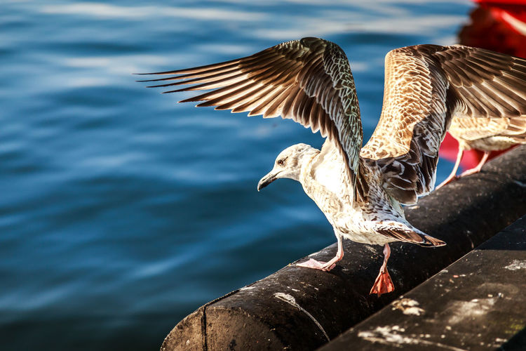 Close-up of bird perching by sea